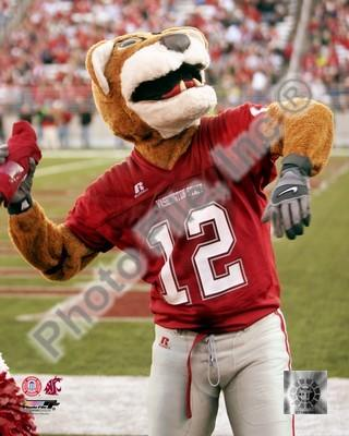 Washington State Cougars Mascot 8x10 Photo